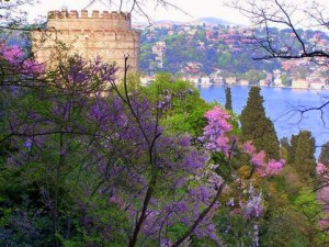 زهور الربيع اسطنبول